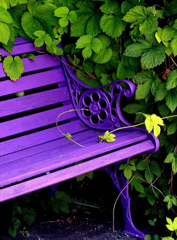 purple bench