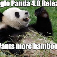 What Panda 4.0 Means for Your Business