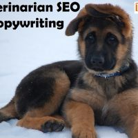 Veterinarian SEO Copywriting and Search Engine Optimization