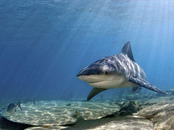 2015 North Carolina Shark Attack Map, Timeline, Myths