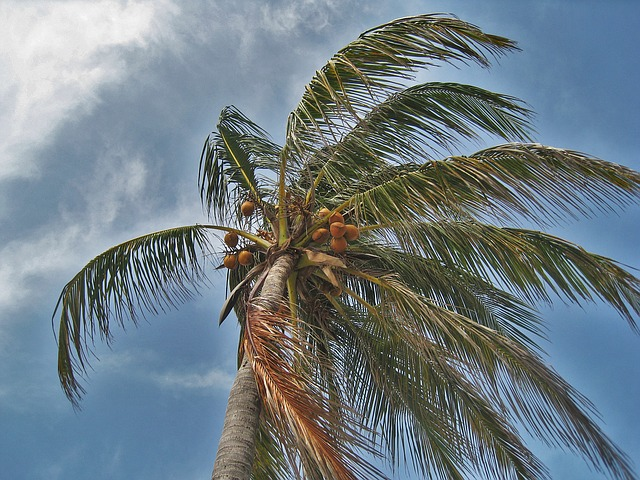palm-tree-in-the-storm-1088921_640