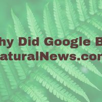 Why Did Google Penalize NaturalNews.com in February 2017?